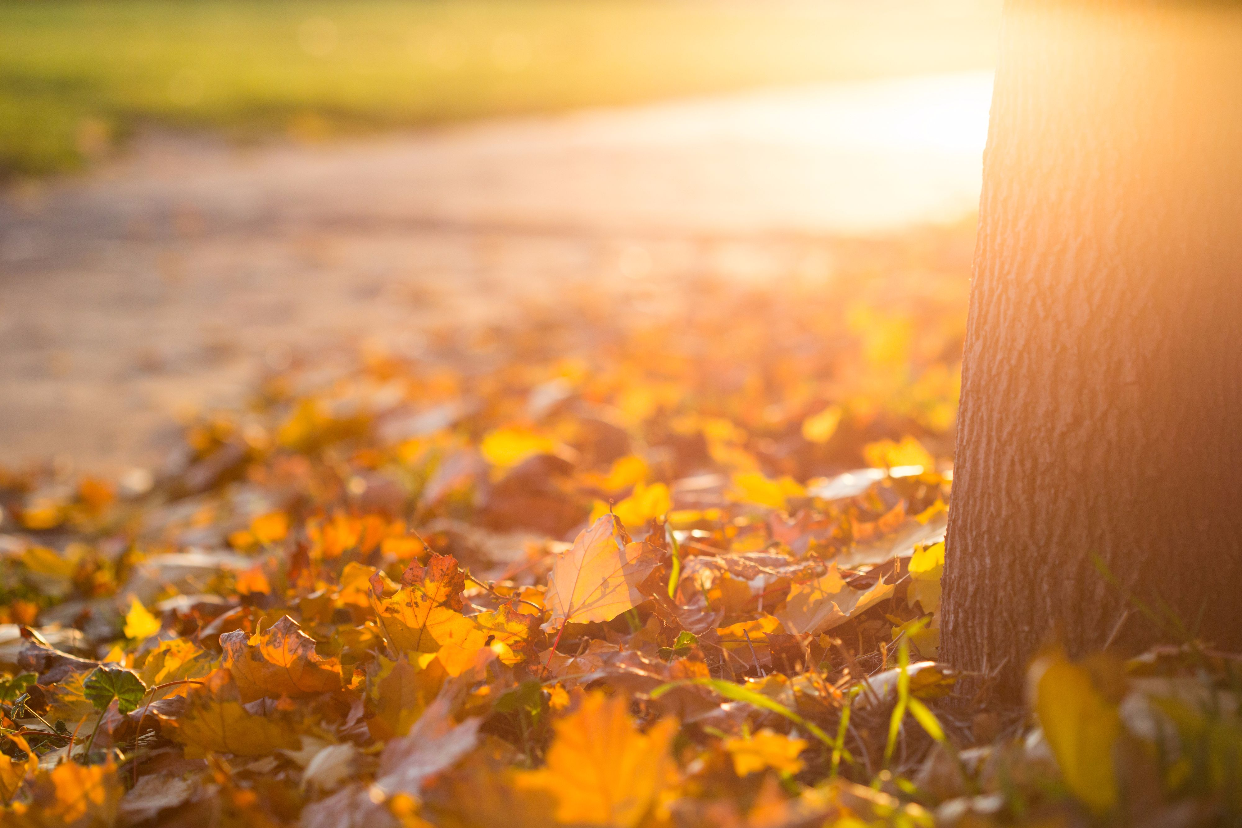 fall-autumn-leaves-on-the-ground-picjumbo-com-compressed